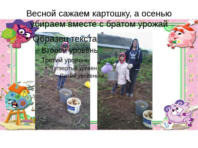 Весной сажаем картошку, а осенью убираем вместе с братом урожай