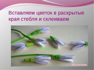 Вставляем цветок в раскрытые края стебля и склеиваем