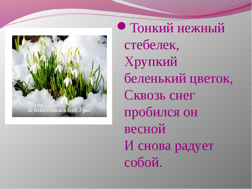 Тонкий нежный стебелек, Хрупкий беленький цветок, Сквозь снег пробился он вес...