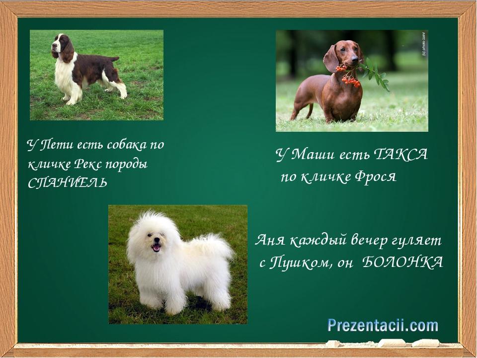 У Пети есть собака по кличке Рекс породы СПАНИЕЛЬ У Маши есть ТАКСА по кличк...