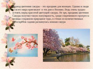 Период цветения сакуры – это праздник для японцев. Однако и люди со всего ми