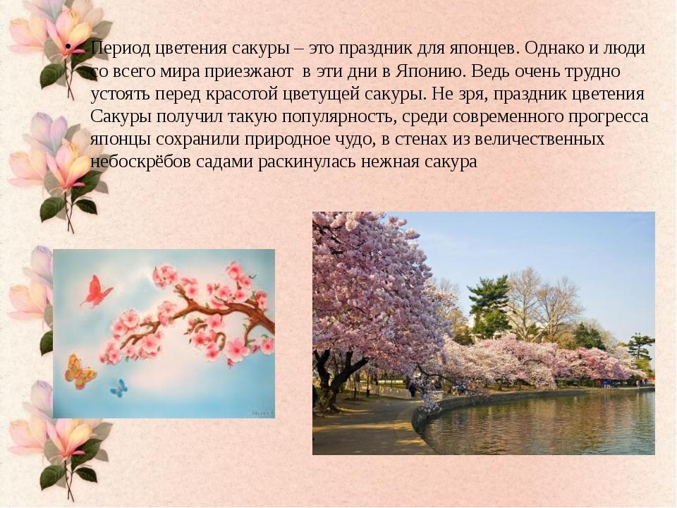 Период цветения сакуры – это праздник для японцев. Однако и люди со всего ми...