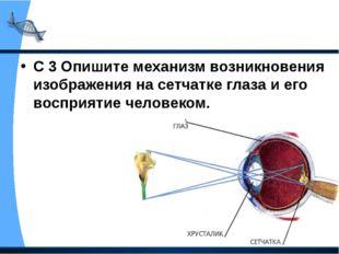 С 3 Опишите механизм возникновения изображения на сетчатке глаза и его воспри