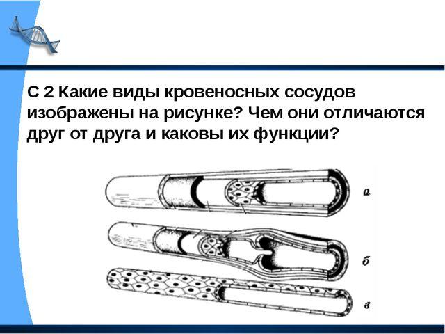С 2 Какие виды кровеносных сосудов изображены на рисунке? Чем они отличаются...