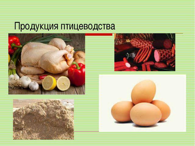 Продукция птицеводства