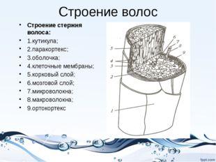 Строение волос Строение стержня волоса: 1.кутикула; 2.паракортекс; 3.оболочка