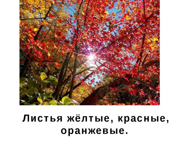 Листья жёлтые, красные, оранжевые.