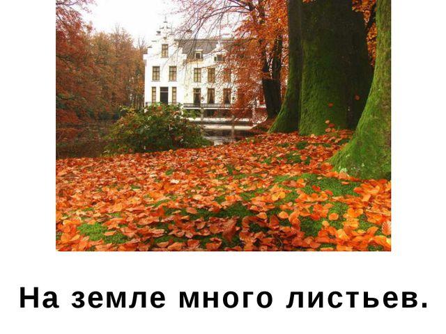 На земле много листьев.