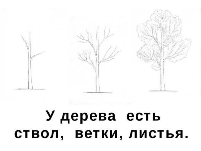 У дерева есть ствол, ветки, листья.