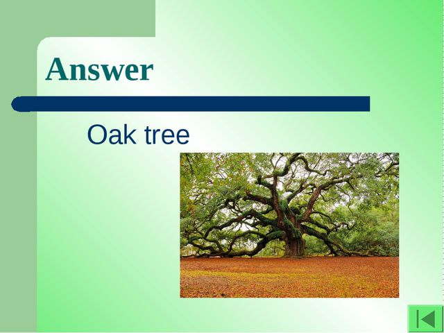 Answer Oak tree