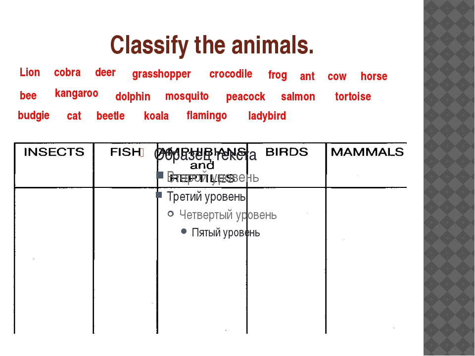 Classify the animals. Lion cobra deer grasshopper crocodile frog ant cow hors...