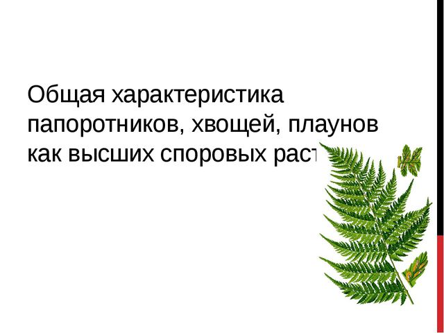 Общая характеристика папоротников, хвощей, плаунов как высших споровых растен...