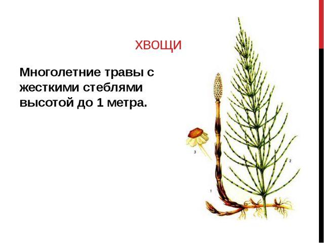 хвощи Многолетние травы с жесткими стеблями высотой до 1 метра.