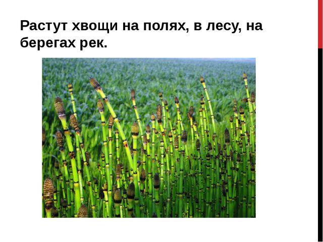 Растут хвощи на полях, в лесу, на берегах рек.