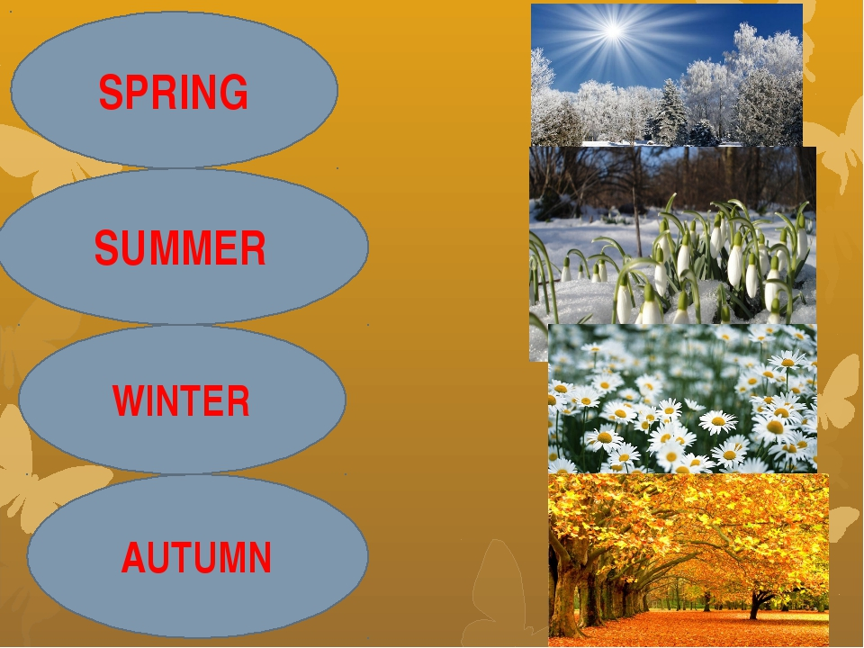 SPRING SUMMER WINTER AUTUMN