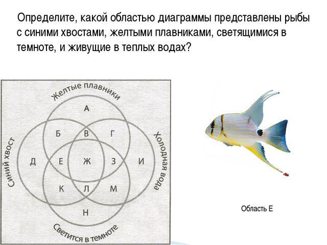 Определите, какой областью диаграммы представлены рыбы с синими хвостами, жел...