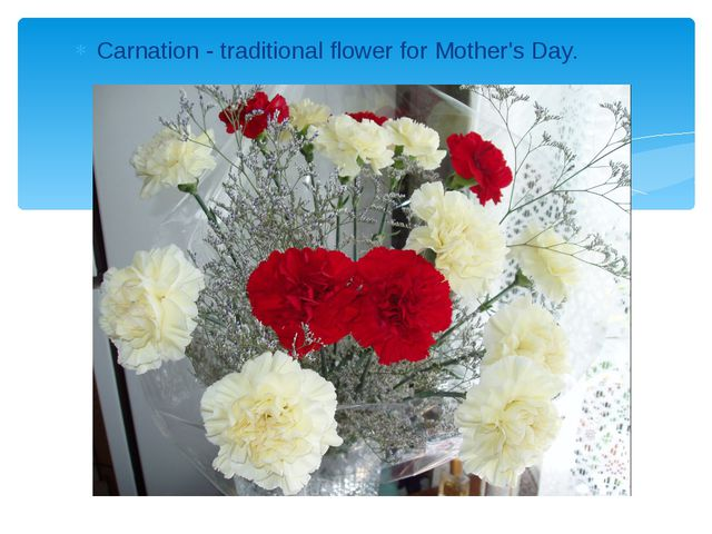 Carnation - traditional flower for Mother's Day.