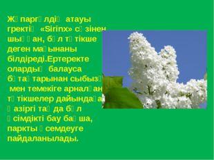 Жұпаргүлдің атауы гректің «Sirinx» сөзінен шыққан, бұл түтікше деген мағынаны