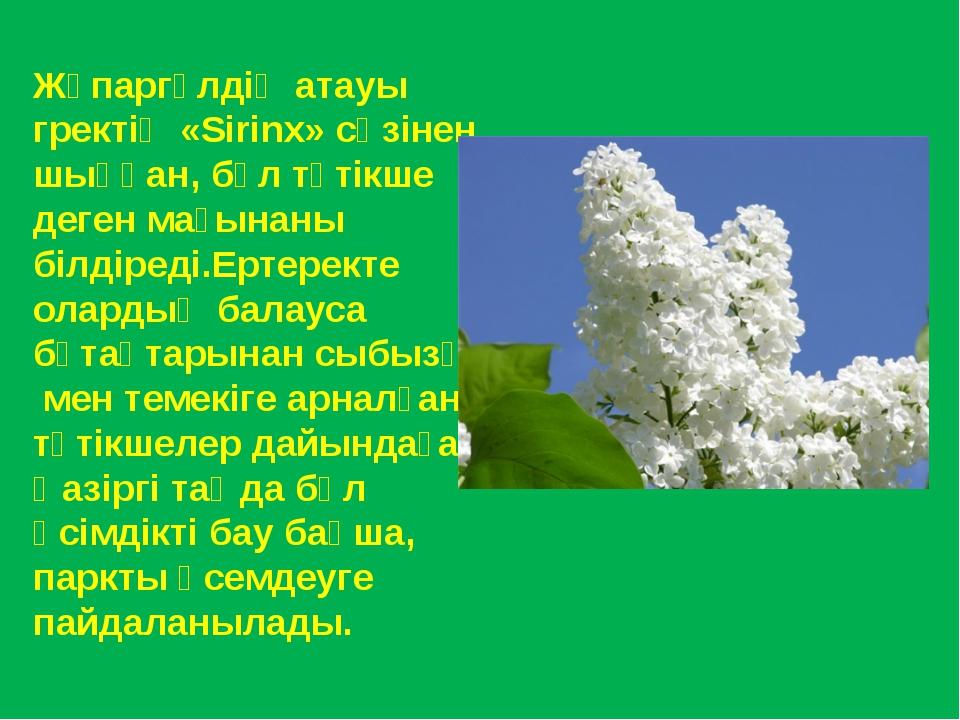 Жұпаргүлдің атауы гректің «Sirinx» сөзінен шыққан, бұл түтікше деген мағынаны...