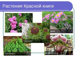 Растения Красной книги Пион