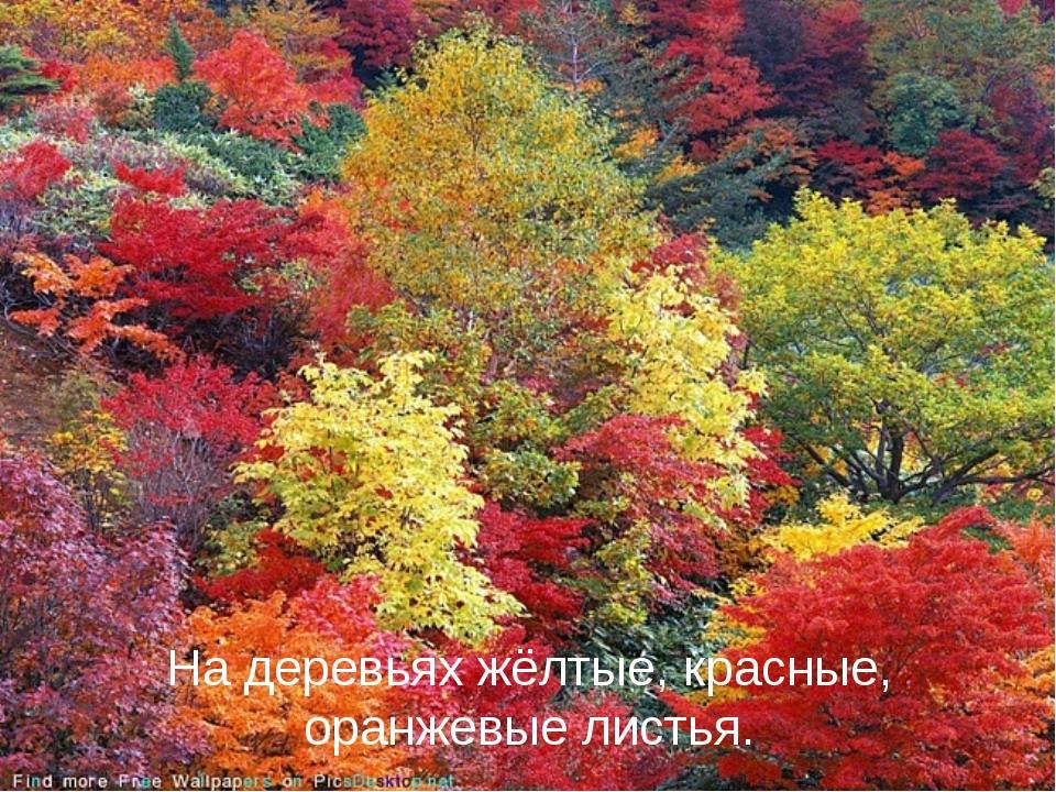 На деревьях жёлтые, красные, оранжевые листья.