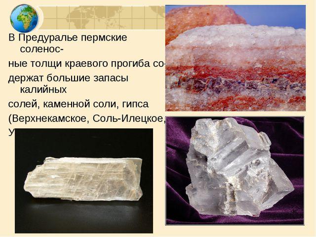 В Предуралье пермские соленос- ные толщи краевого прогиба со- держат большие...