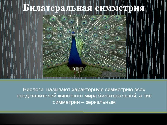 Биологи называют характерную симметрию всех представителей животного мира би...