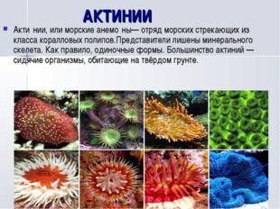 АКТИНИИ Акти́нии, или морские анемо́ны— отряд морских стрекающих из класса к