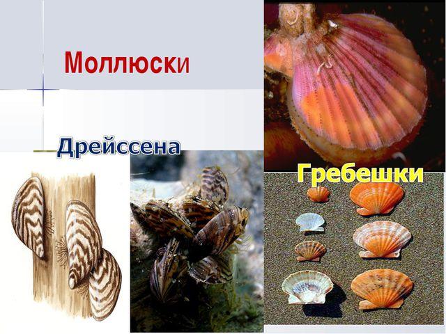 Моллюски