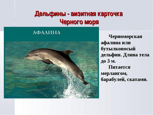Дельфины - визитная карточка Черного моря Черноморская афалина или бутылконос...