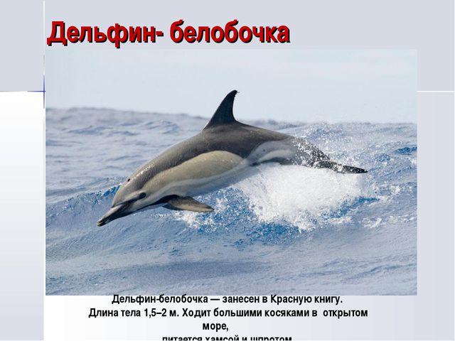 Дельфин- белобочка Дельфин-белобочка — занесен в Красную книгу. Длина тела 1,...