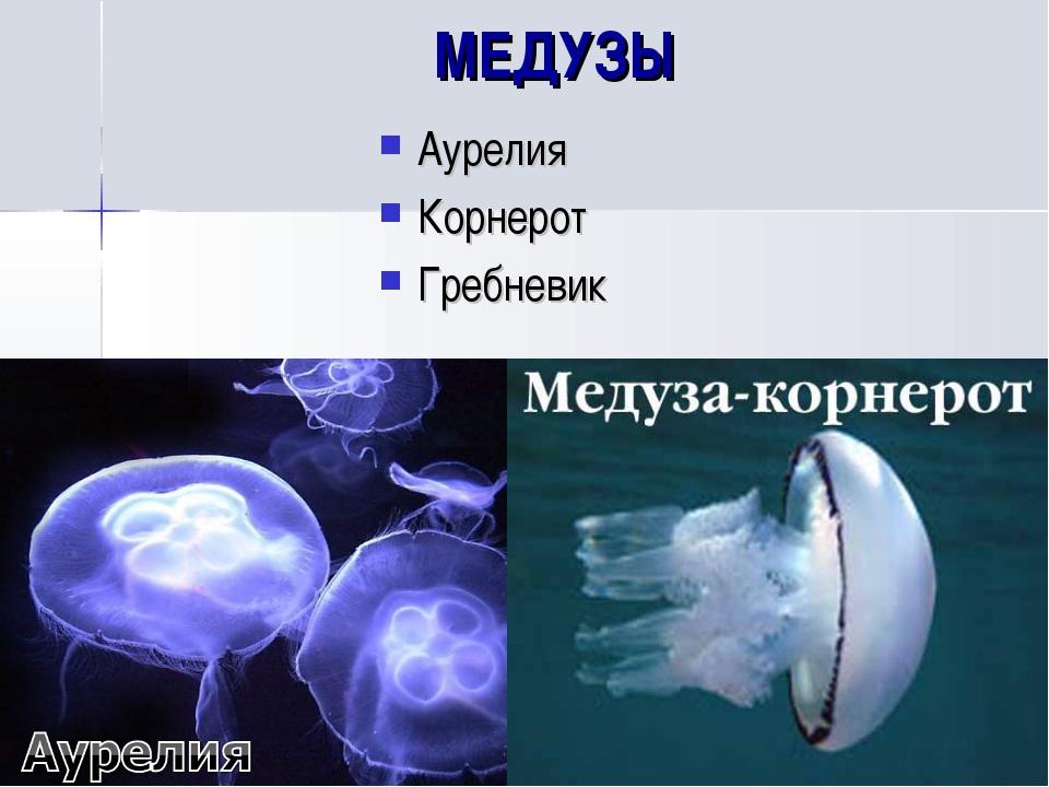 МЕДУЗЫ Аурелия Корнерот Гребневик