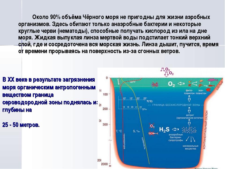 В XX веке в результате загрязнения моря органическим антропогенным веществом...