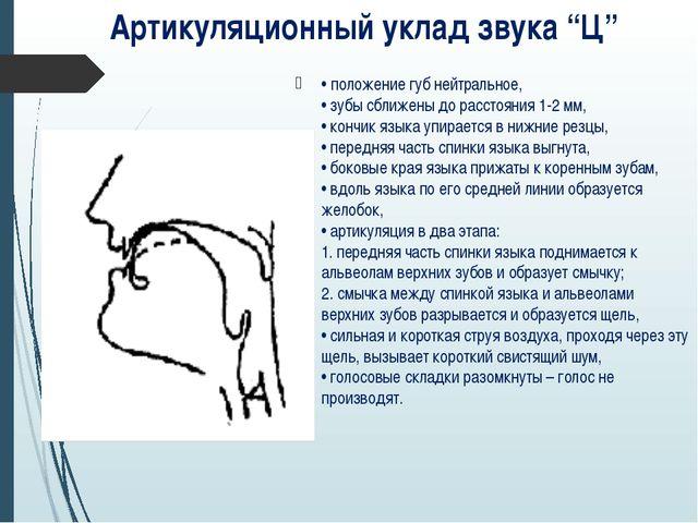 • положение губ нейтральное, • зубы сближены до расстояния 1-2 мм, • кончик я...