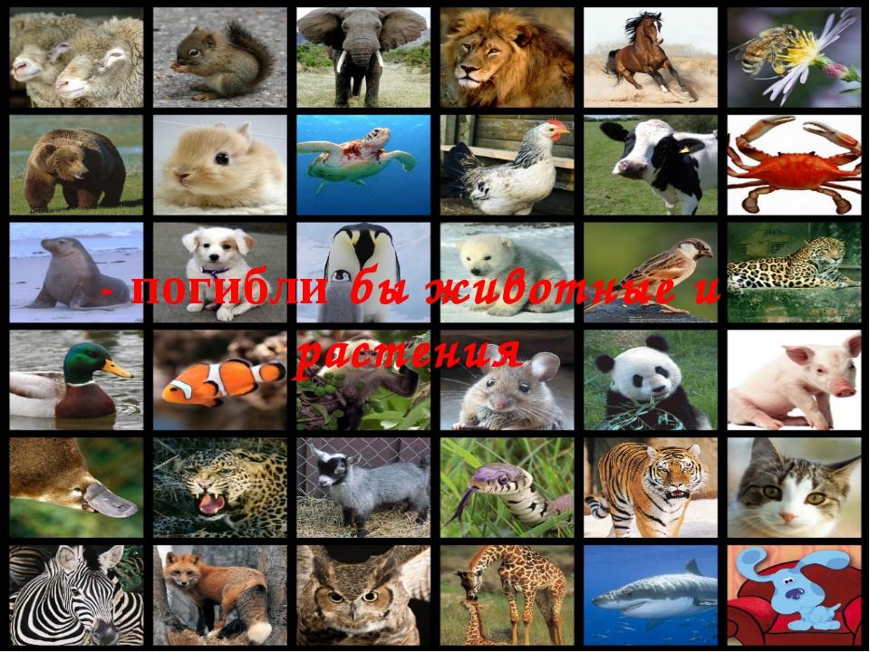 - погибли бы животные и растения