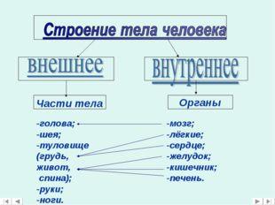 Части тела -голова; -шея; -туловище (грудь, живот, спина); -руки; -ноги. Орга