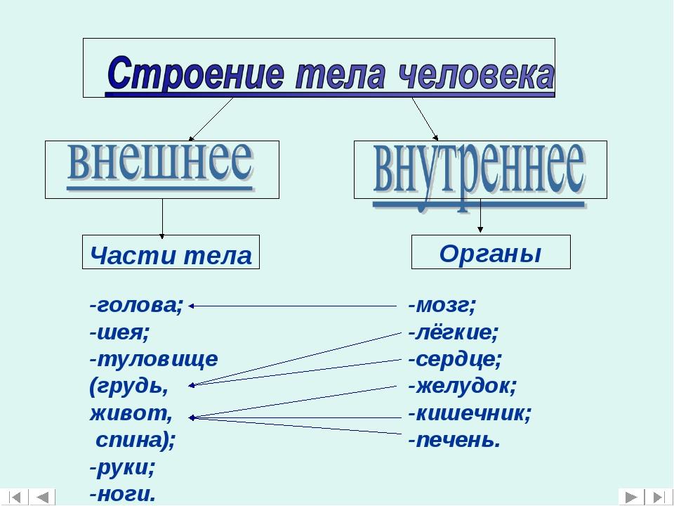 Части тела -голова; -шея; -туловище (грудь, живот, спина); -руки; -ноги. Орга...