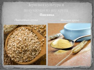 Зерновая культура и получаемая из нее крупа Пшеница Пшеничная крупа Манная кр