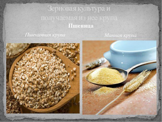 Зерновая культура и получаемая из нее крупа Пшеница Пшеничная крупа Манная кр...