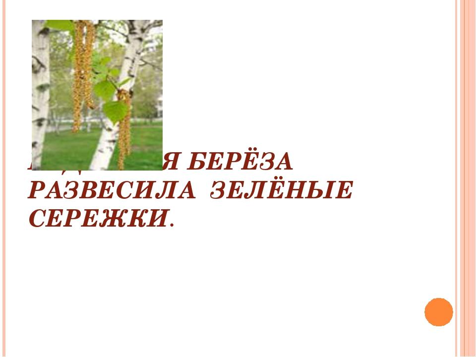 КУДРЯВАЯ БЕРЁЗА РАЗВЕСИЛА ЗЕЛЁНЫЕ СЕРЕЖКИ.