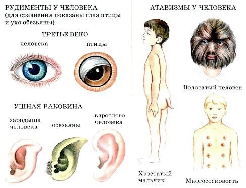 http://www.tepka.ru/biologiya_cheloveka/2.4.jpg