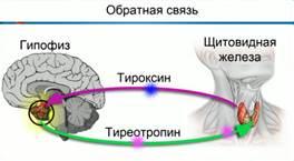http://static.interneturok.cdnvideo.ru/content/konspekt_image/42338/49994100_f673_0130_97a1_12313d00e491.jpg