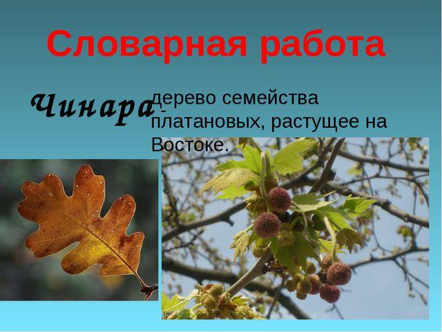 Словарная работа Чинара -  дерево семейства платановых, растущее на Востоке.