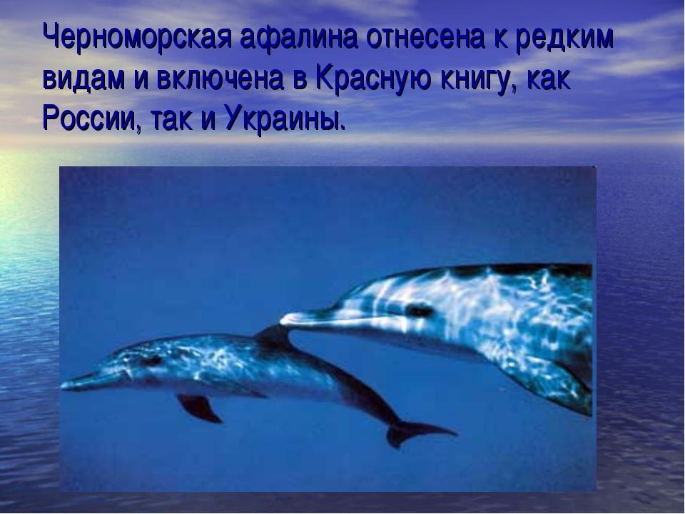 Черноморская афалина отнесена к редким видам и включена в Красную книгу, как...