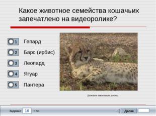 10 Задание Какое животное семейства кошачьих запечатлено на видеоролике? Гепа