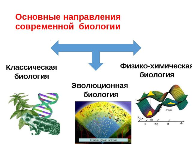 Основные направления современной биологии Классическая биология Эволюционная...