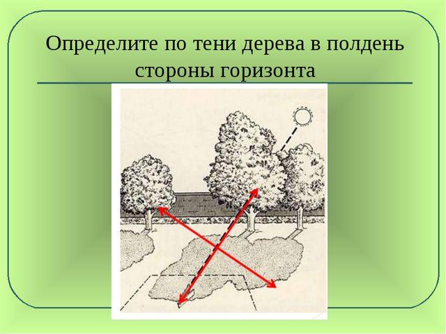 Определите по тени дерева в полдень стороны горизонта