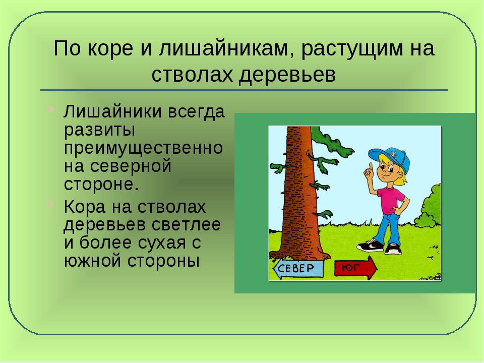 По коре и лишайникам, растущим на стволах деревьев Лишайники всегда развиты п...