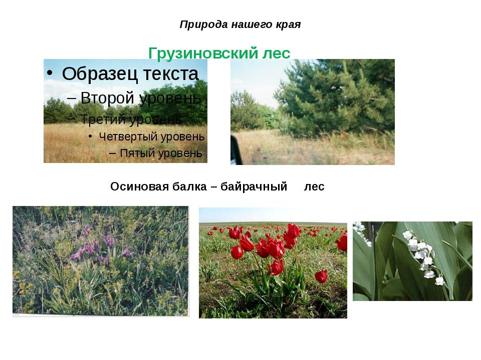 Природа нашего края Грузиновский лес Осиновая балка – байрачный лес