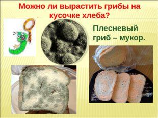 Плесневый гриб – мукор. Можно ли вырастить грибы на кусочке хлеба?